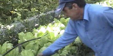 Se recupera la agricultura familiar en Santa Clara