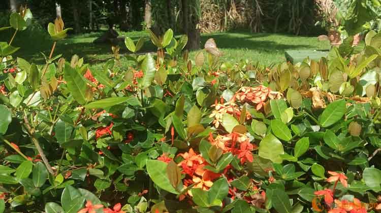 La naturaleza se muestra exhuberante en Villa La Granjita.