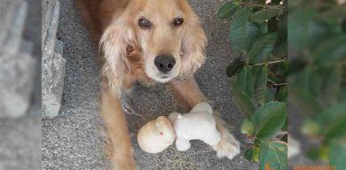 Publican decreto ley de Bienestar Animal en Gaceta Oficial (+PDF)