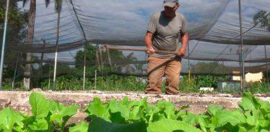 Reconocen Raúl y Díaz-Canel Programa de la Agricultura Urbana, Suburbana y Familiar en su 33 aniversario