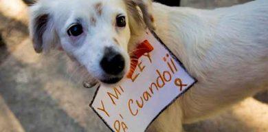 Proyecto de ley de bienestar animal a revisión en Cuba para su posible aprobación