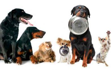 ¿Qué alimentos no se le deben dar a las mascotas?