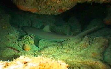 El sueño de los tiburones