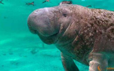 Vida y muerte de mamíferos marinos en Villa Clara