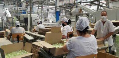 Suchel Camacho estabiliza importantes producciones de cara al mercado nacional